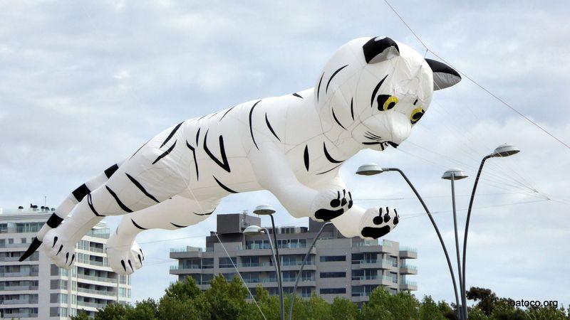 Barrilete tigre blanco